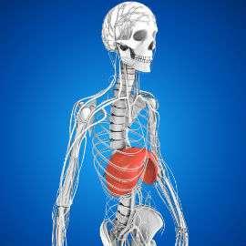 Zwerchfell-der-attackierte-Seelenmuskel