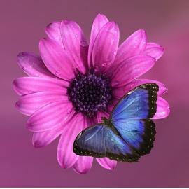 Gelassenheit-Symbol-Blume-Schmetterling